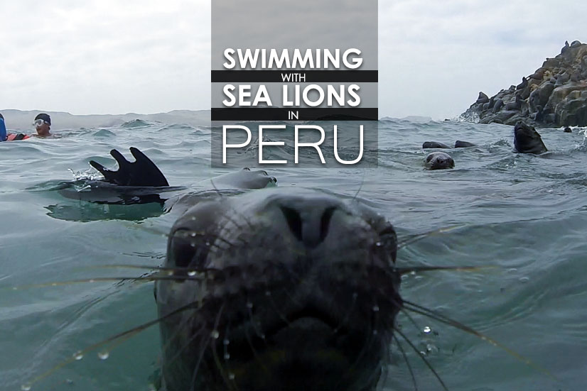 Swimming with Sea Lions in Peru & How You Can Do It To!