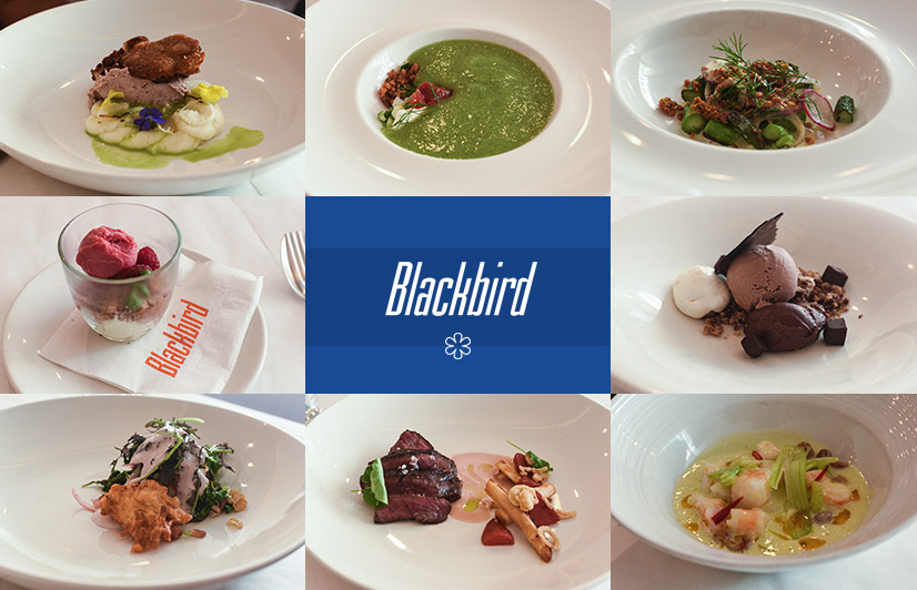 blackbird chicago