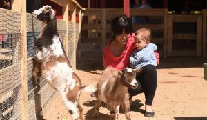 Visiting The Zoomars Petting Zoo In San Juan Capistrano Califoreigners
