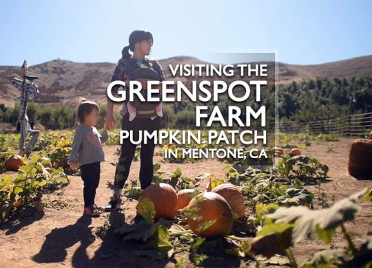 Greenspot Farm Pumpkin Patch in Mentone, CA