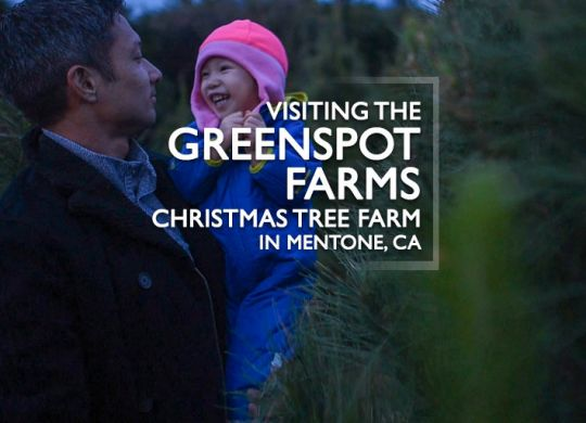 greenspot farms christmas tree farm