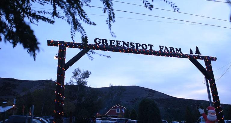 greenspot farms christmas tree farm