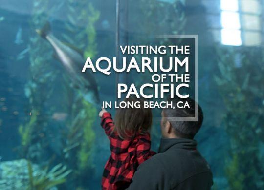 Aquarium of the Pacific with kids