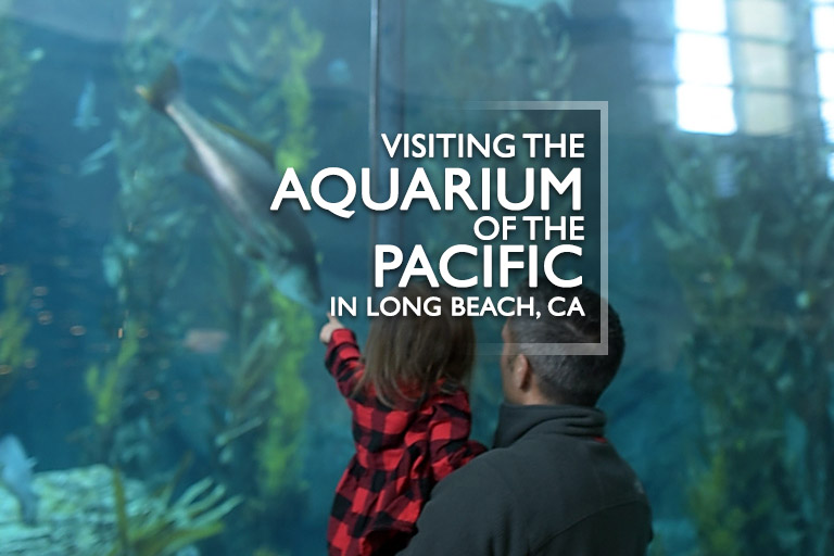 Aquarium of the Pacific with kids
