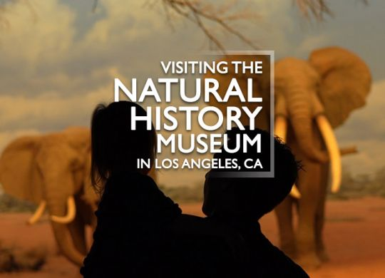 Visiting the Natural History Museum in Los Angeles, CA