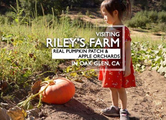 Riley's Farm Apple Orchard