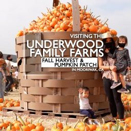 Visiting the Underwood Family Farm Pumpkin Patch in Moorpark, CA 2020