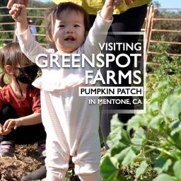 Visiting the Greenspot Farms Pumpkin Patch 2020