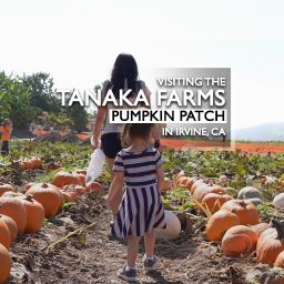 Visiting the Tanaka Farms Pumpkin Patch in Irvine, CA 2020