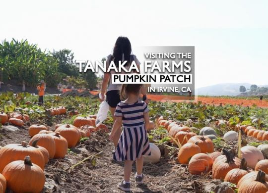Tanaka Farms Pumpkin Patch 2020