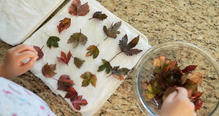 Creating Fall Botanical Cookies