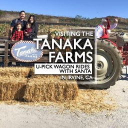 Tanaka Farms U-Pick wagon rides with santa