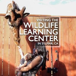 Wildlife Learning Center 2020