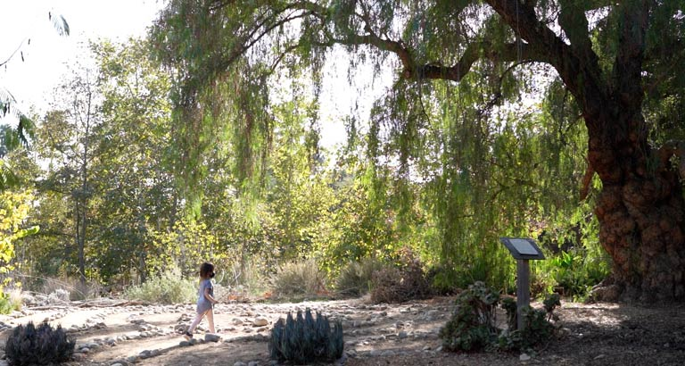 arlington garden pasadena explore