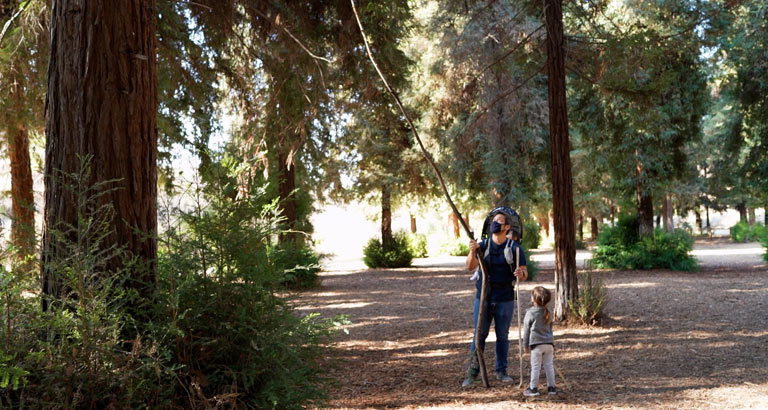 Redwood Grove trail