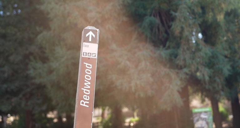 Redwood Grove Carbon Canyon Regional Park