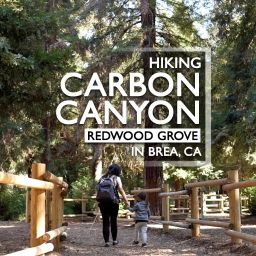 Hiking to Redwood Grove in Yorba Linda, CA