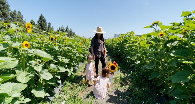 standing in sunflower field in hana field costa mesa