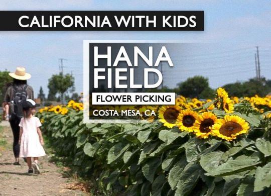 Hana Field sunflower fields