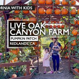 Visiting Live Oak Canyon Pumpkin Patch Farm in Redlands, CA