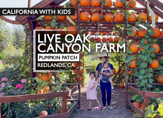 Live Oak Canyon Pumpkin Patch Farm blog post